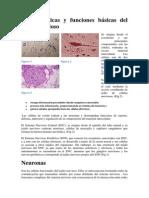 histología del SN.docx