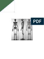 Skeleton 4 Inches Armature