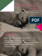 Fisiología de la hibernación en osos