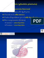 Curso 4 Endocrinology Pituitary
