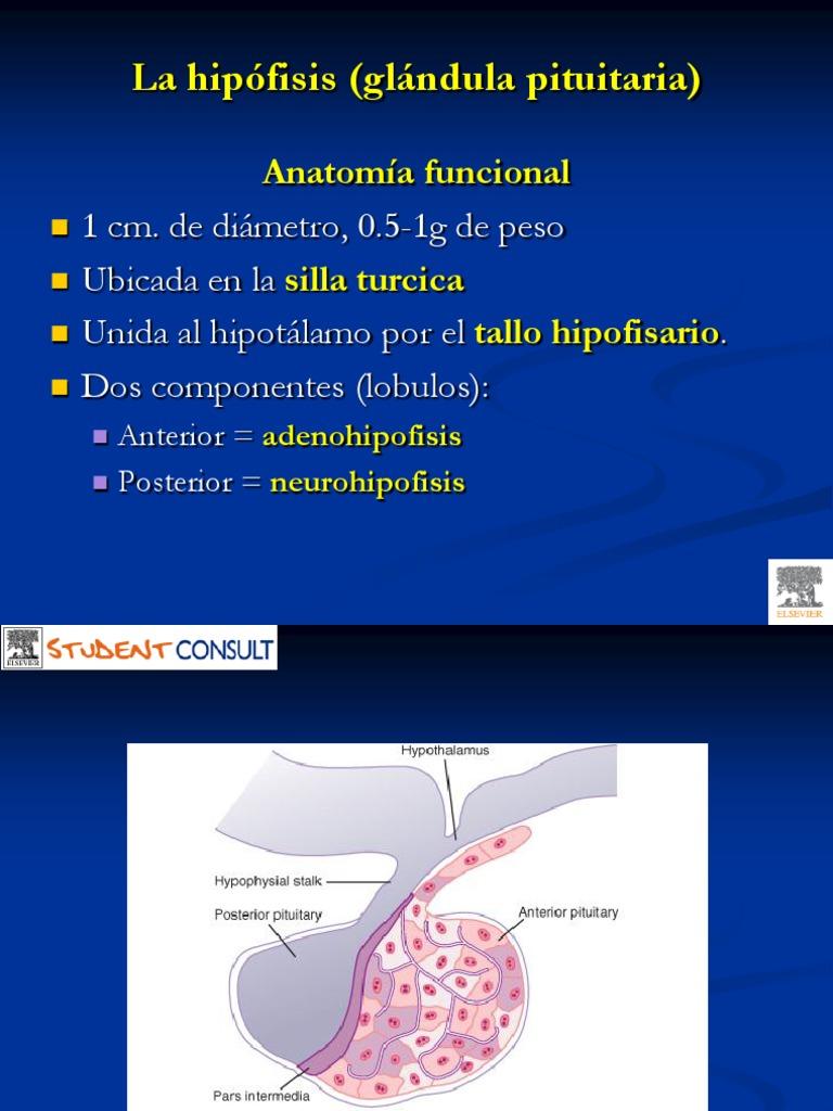 diabetes insípida de la glándula pituitaria posterior