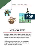 bioenergetica-y-metabolismo-1-1218310359221600-9.ppt