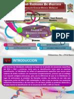 TECNICAS DE HIBRIDACIÓN