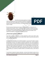 EL ÁCARO ROJO.pdf