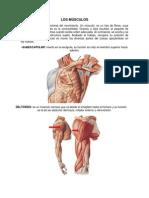Musculos y Huesos