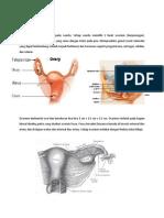 Ovary & Oviduct