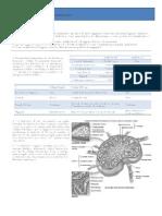 100076516 Imunologia Q Revisao Cap 1 Abbas