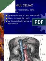 trunchiul celiac