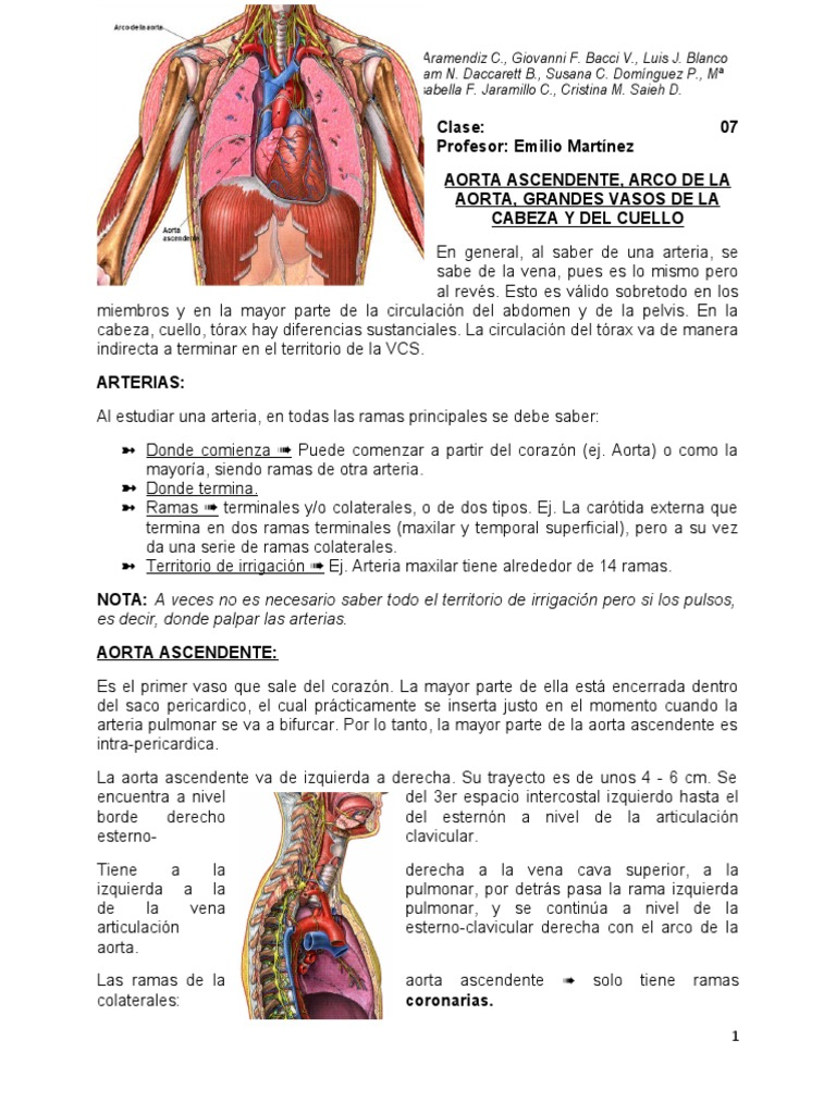 irrigacion cabeza y cuello.pdf