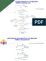 Metabolismo de Aminoacidos - parte 2