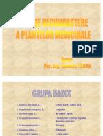 Ghid Plante