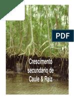 crescimentosecundario_parte1