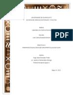PREPARACIÓN BIOLÓGICA DE NANOPARTÍCULAS DE PLATA