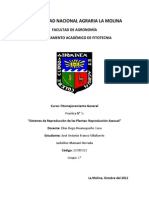 Informe 3-R. Asexual