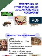 Mordedura de Serpientes, Picadura de Abejas,