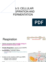 Lab 5_Cellular Respiration and Fermentation_student_2011