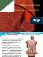 85357488 Sistema Muscular