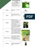 Insecte folositoare
