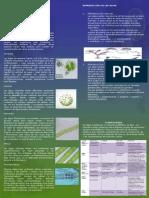 Cartel de Algas Original