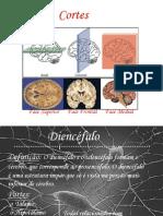 Aula Soci Neuro Anatomia Di