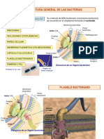 Fisiologia y Metabolismo Mircobiano
