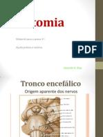 Anatomia PROVA 3.pptx