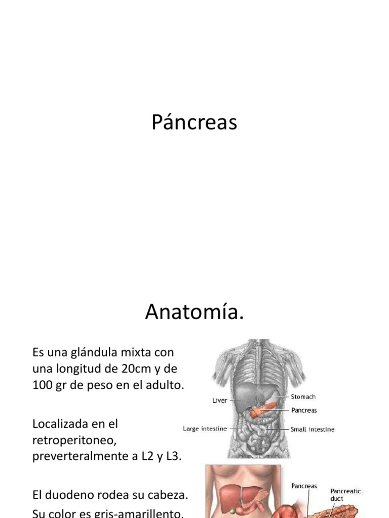 anatomia y fisiología del pancreas