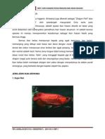 Assignment Ikan Arowana