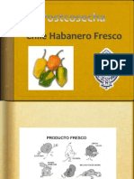 Chile Habanero Fresco