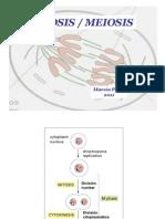 3-Mitosis-Meiosis.pdf