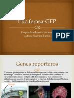 Luciferasa-GFP
