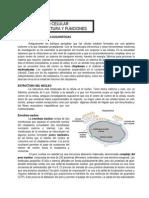 modulo7.doc