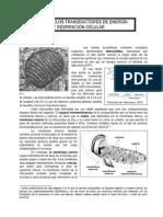 modulo9.doc