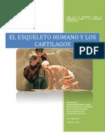 El Esqueleto Humano y Los Cartilagos