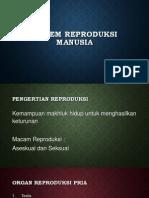 Sistem Reproduksi Manusia 2013