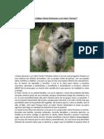 Entrenar a Un Cairn Terrier