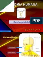 Cuello Parietal.