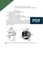 Anterior Rhinoscopy