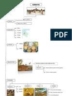 Mapa Conceptual Quimbayas
