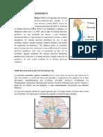 Sistema Nervioso Pefiferico