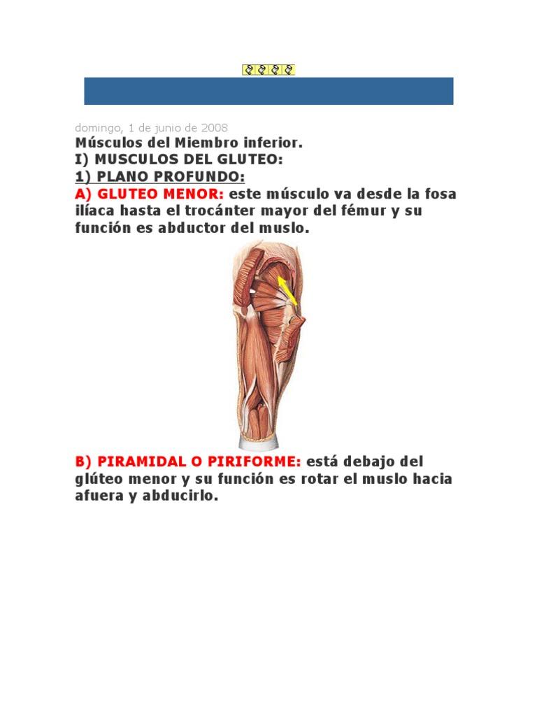 Magnífico Anatomía Piriforme Fosa Embellecimiento - Anatomía de Las ...