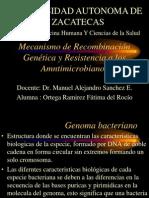 Recombinación Genetica