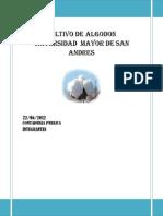 Cultivo de Algodon