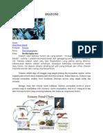 Tugas Diatom EARTH