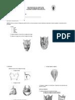 Taller de Repaso Primer Corte Anatomia