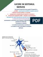 Introducere in Sistemul Nervos