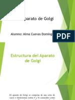 Estructura Del Aparato de Golgi