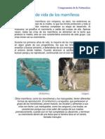 Ciclo de vida de los mamíferos