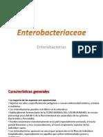 2.- Enterobacterias