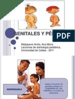 GENITALES Y PÉRINE